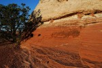 Navajo Sandstone: Canyonlands, Utah