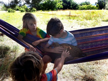 Children at Mountain Spirit, enjoying chicken energy